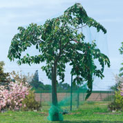 filet de protection pour arbre